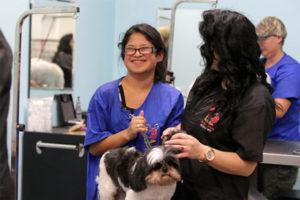 Advanced Professional Pet Stylist