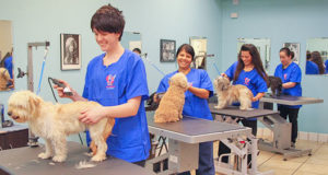 Students in the Pet Grooming Area