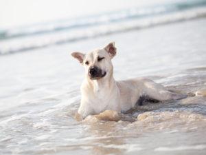Why Ingesting Saltwater Is Bad - Dog Grooming School - Pet Grooming