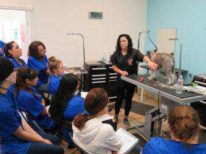 Grooming Instructor Temecula