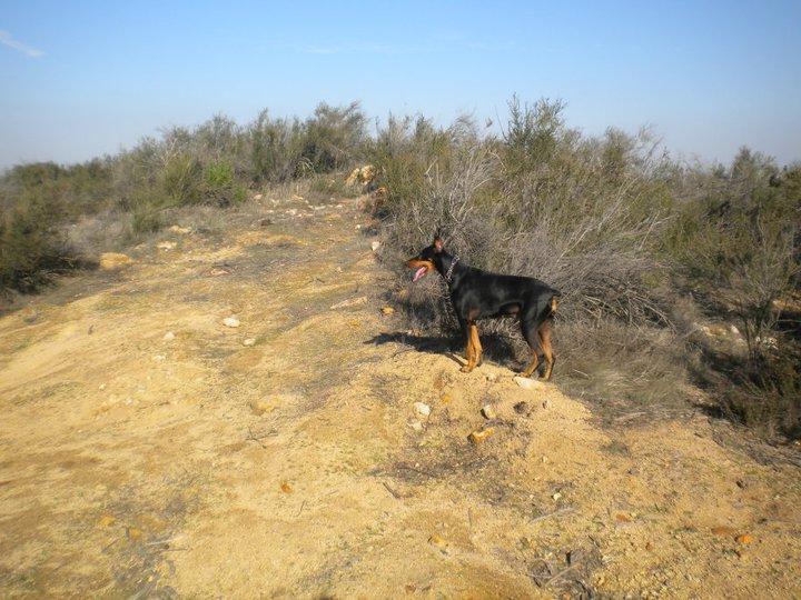 pet groomer temecula dog on trail