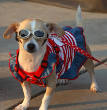pet groomer temecula tips and tricks small dog